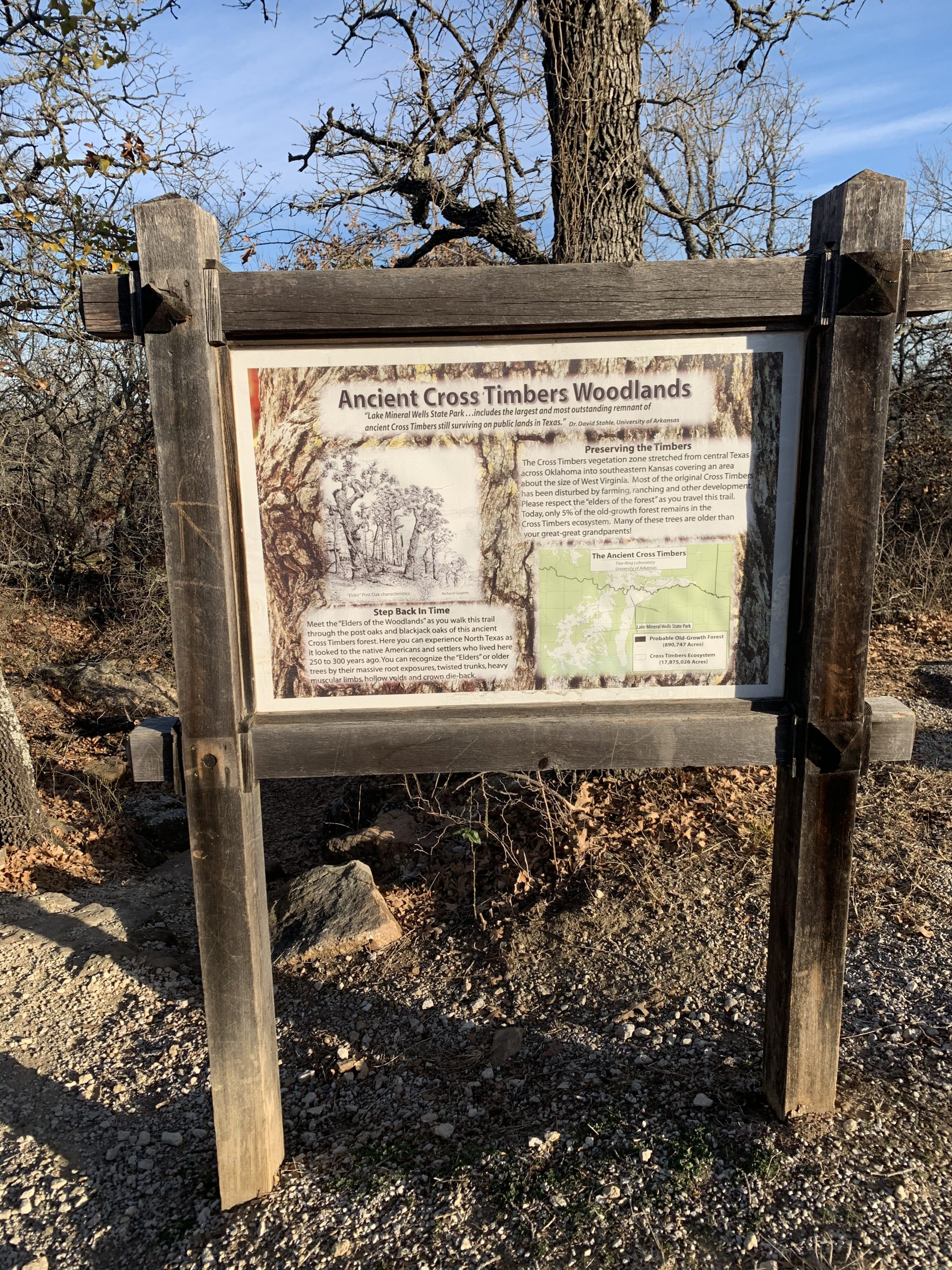 Ancient Cross Timbers Woodlands