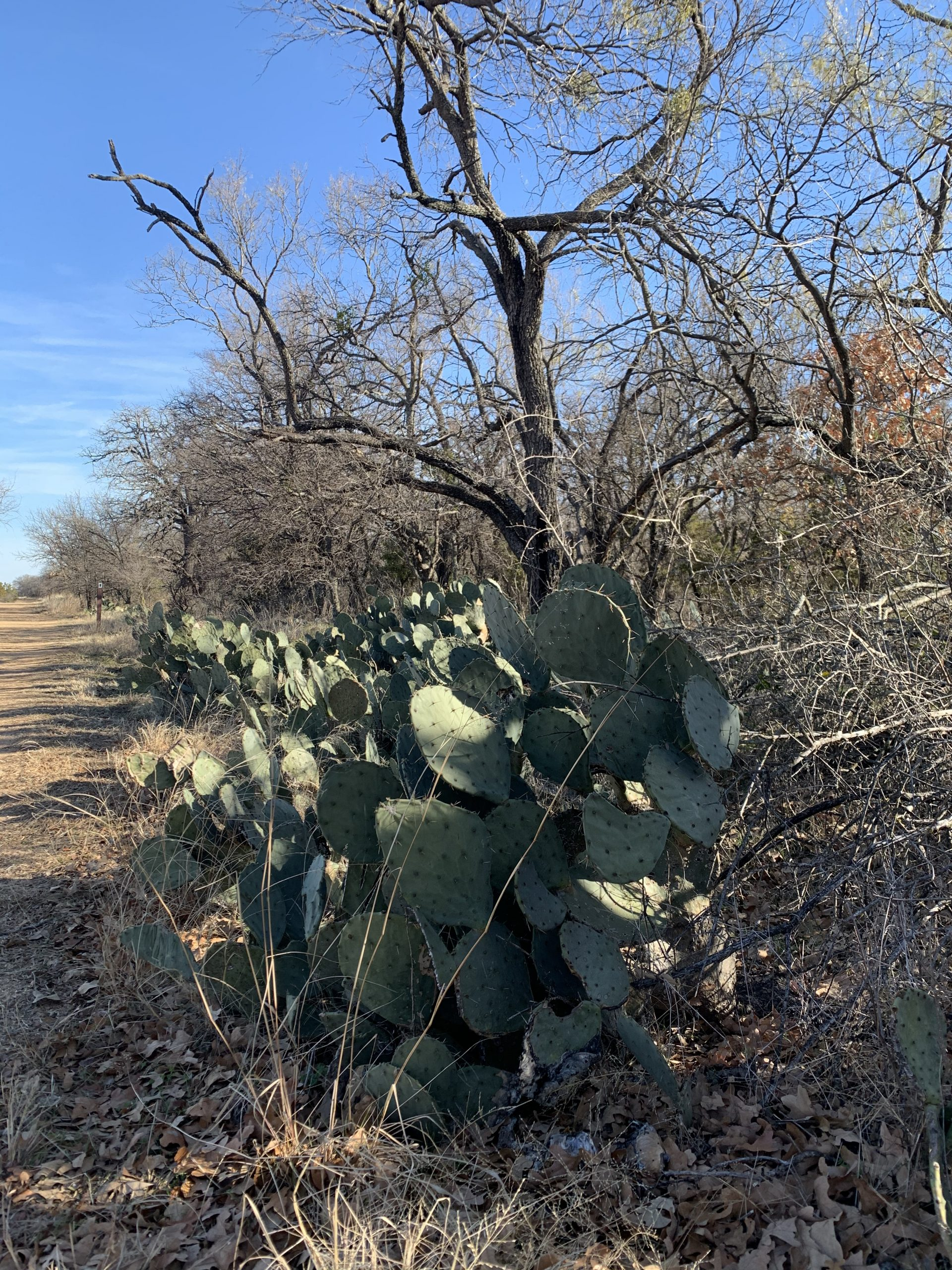 Cactus lined trail